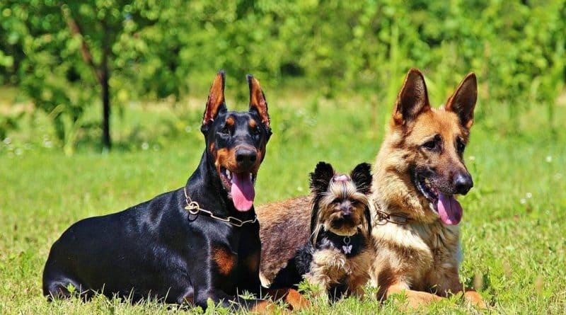 Немецкие породы собак